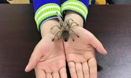 【亲子科普】探秘疯狂动物世界精华版,有趣的实验,DIY昆虫标本