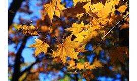 喇叭沟门:秋天的童话世界,这里是北京最美的秋色,没有之一!