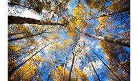 【周末周边·1日休闲】寻找北京短暂的秋天:喇叭沟门原始森林休闲户外游