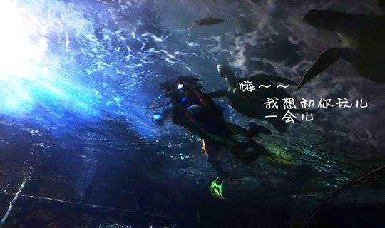 【10月26-27日】【海洋馆潜水 + 夜宿】海龟想和你潜水,与海狮海豹互动,观人鱼公主表演,体验动感5D电影,这个周末很好玩