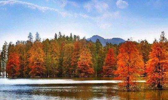 骑行绿道,穿行在青山湖的水上森林里