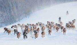 【元旦假期】冰雪奇缘乌兰布统,塞北雪原激情越野行摄活动