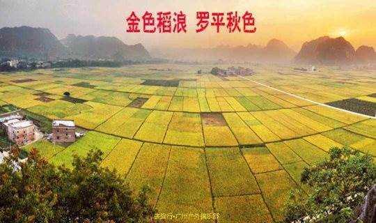(两周年 )10.21日 乡村休闲徒步 罗定苹塘田园秋色 赏金色稻浪