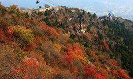 11月17日徒步北京香山公园,看满园香山红叶