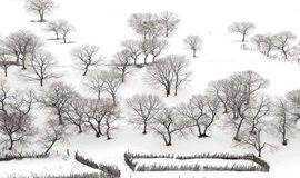 寻找遗失的黑白世界-乌兰布统雪原