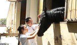 【马术】趣味马术体验,成为健康小骑士