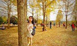 【阳山银杏】12月02号周日:一千年的等候,小江茶山银杏林有约!