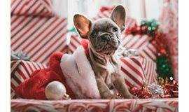 深乐社 欢乐圣诞节派对