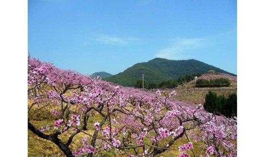 3.24踏春同山古道,游奉化天下第一桃园,看十里桃花朵朵开