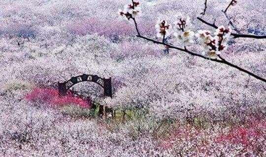 【休闲徒步】徜徉十里梅花香雪海,徒步光福邓尉古道,小三尖登顶赏太湖风光