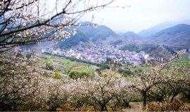 【三月探梅】3月2日秘寻十里梅廊,绍兴千亩香雪梅海