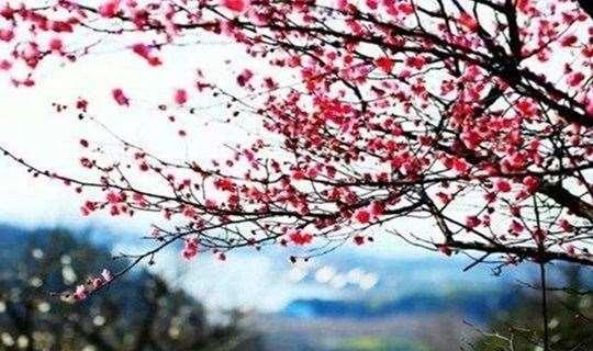 十里梅林花开,相约傅家边赏花踏春采草莓,不负好春光