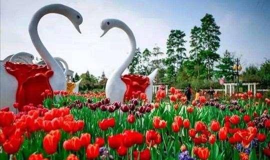 宝趣玫瑰世界500亩和150亩玫瑰柑果园快乐一天游