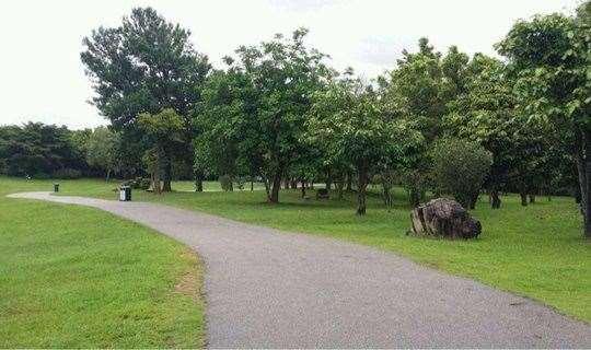 莲花山公园开春徒步