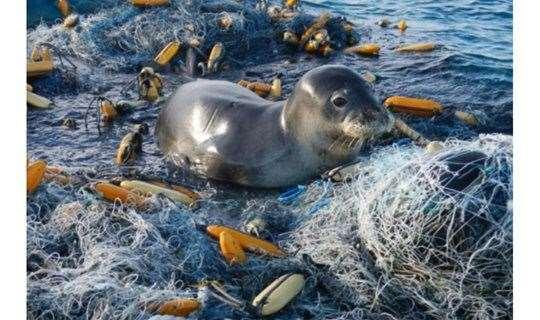 深蓝放映 | 《塑料海洋》