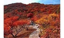 1日|坡峰岭红叶-发现中国红打卡最美秋日,6公里环形栈道漫步,