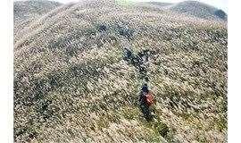 每周六周日出发【户外爬山】惠州大南山穿越黄金大草坡、满山遍野芦苇荡下摄影、云中漫步斧头石 一天活动