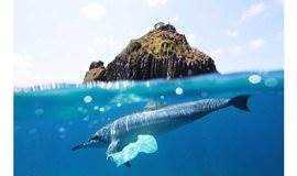 【科学大爆炸系列活动】有一种毒物,鲸鱼、珊瑚和我们每天都在食用