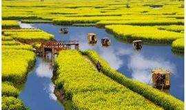 清明节4.4-7:兴化油菜花。扬州瘦西湖。何园。乌镇西栅, 户外休闲摄影