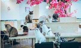 吸猫圣地邂逅猫,在这里邂逅你的另一种心情~
