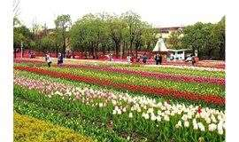 3月23日徒步大宁公园,赏120万珠郁金香花海