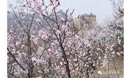 3.23日京郊最美的水长城 山花烂漫 一日穿越 免票线 (赏花期)