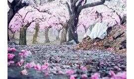 4.27:平谷桃花节,三生三世十里桃花穿越万亩花海,老象峰,,
