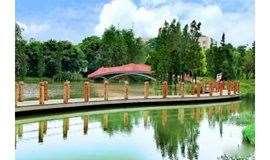 4月20日徒步绿岛湖湿地公园,波斯菊、孔雀草绽放