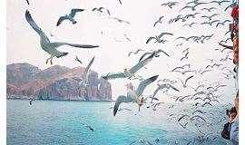 暑期【长岛之恋】长岛 蓬莱 万鸟岛 候叽岛 庙岛 海豹苑 拍片吃海鲜 无夜车3日游