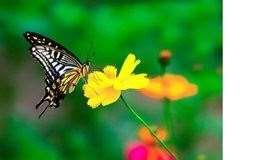 有意思的生物课【蝴蝶的一生】