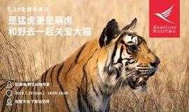 全球老虎日 | 是猛虎更是萌虎,和野去一起撸大猫