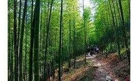 徒步从化溪头村影古线,穿越最美竹海