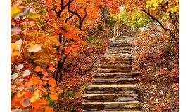 1日|探寻京郊最美秋色-坡峰岭红叶-6公里环形栈道漫步