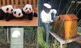 【小小达尔文】动物观察和自然保育亲子活动(1大1小)