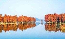 探四明湖水杉,看最美觀景平臺,走羊額嶺古道(1天活動)