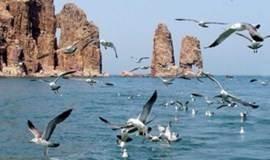 清明/五一:蓬莱长岛,乘船出海庙岛-万鸟岛,九丈崖-月亮湾,峰山林海黄渤海分界线,仙境源,