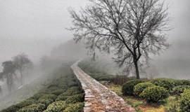 徒步郎当古道,穿越龙井村茶田,徜徉在杭州的小九寨:九溪十八涧(1天活动)