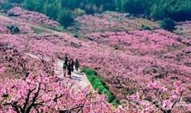 深入奉化十里桃花花海,徒步风景优美的古道(1天活动)