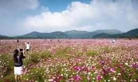 【单身专题】漫步醉美紫色花海,探访江南的'平遥古城'(1天活动)