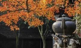 徒步杭州最美森林步道,步入满陇桂雨,探寻天下第三泉(1天活动)