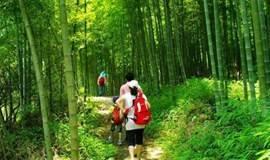 【避暑】广州最美徒步路线,穿越十里竹林,品尝特色小吃(一天)