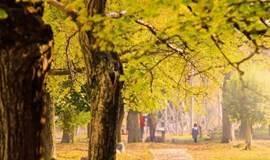 扫黄季,相约长兴十里古银杏长廊,寻找最美秋色(1天活动)