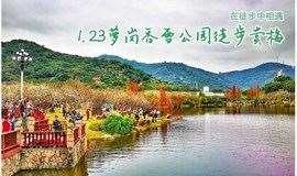 十里梅林绽放美如雪,1月23日萝岗香雪公园徒步赏梅