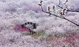 【周末】徒步穿越太湖三尖,探寻梦中的香雪海(1天活动)