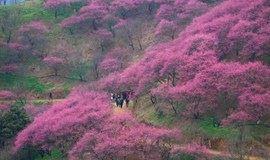 【周边】探访宁波的网红赏梅地,漫步将氏故里溪口古镇(杭州1天活动)