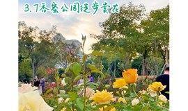 3月7日香蜜公园徒步赏花,打卡玫瑰园、郁金香园、格桑花海
