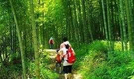 广州最美徒步路线,穿越十里竹林,品尝特色小吃(一天)