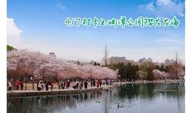 4月17日玉渊潭公园徒步赏花,3000株樱花绽放