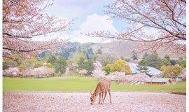 樱花盛开之季,快来一起DIY日本樱花节蜡烛吧!