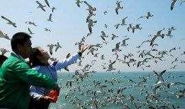 端午3日|晓和•长岛|不走夜车の海上仙山长岛の蓬莱-长岛-庙岛-万鸟岛-月亮湾|享最美海岛浪漫假期